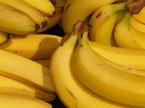 banane papa app